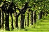 řada stromů v listové zeleně