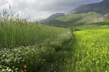 Green field with flowers.