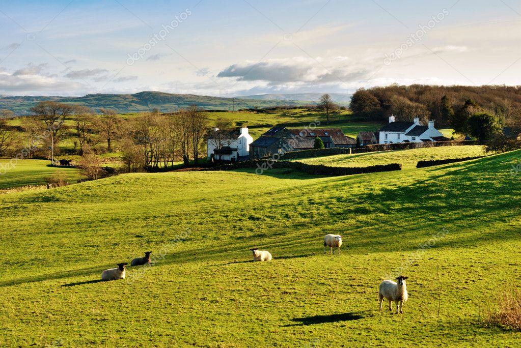 campagna inglese con pascolo di ovini foto stock