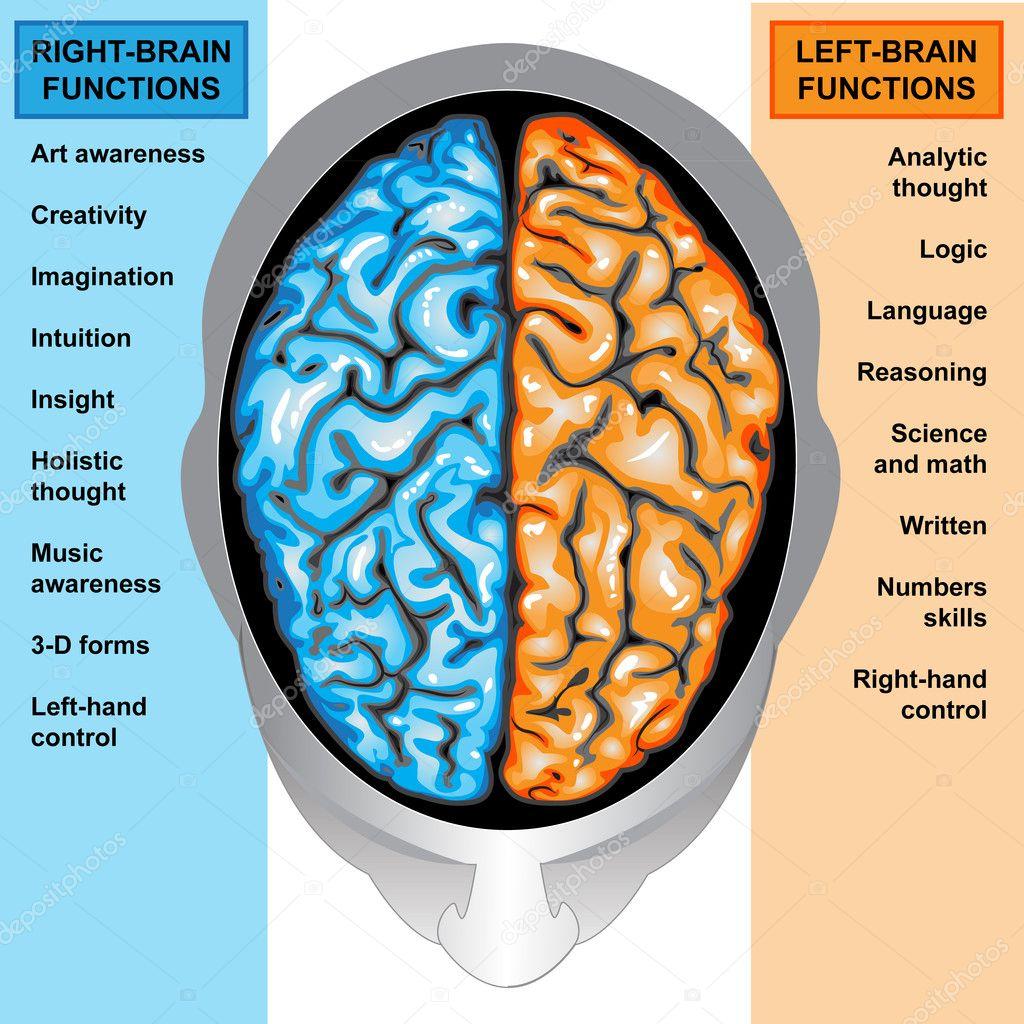 menschliche Gehirn linke und Rechte-Funktionen — Stockfoto ...