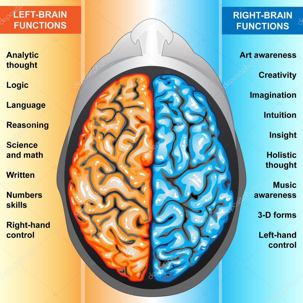 new product 5857c bdfb9 Funzioni sinistra e destra del cervello umano — Foto Stock ...