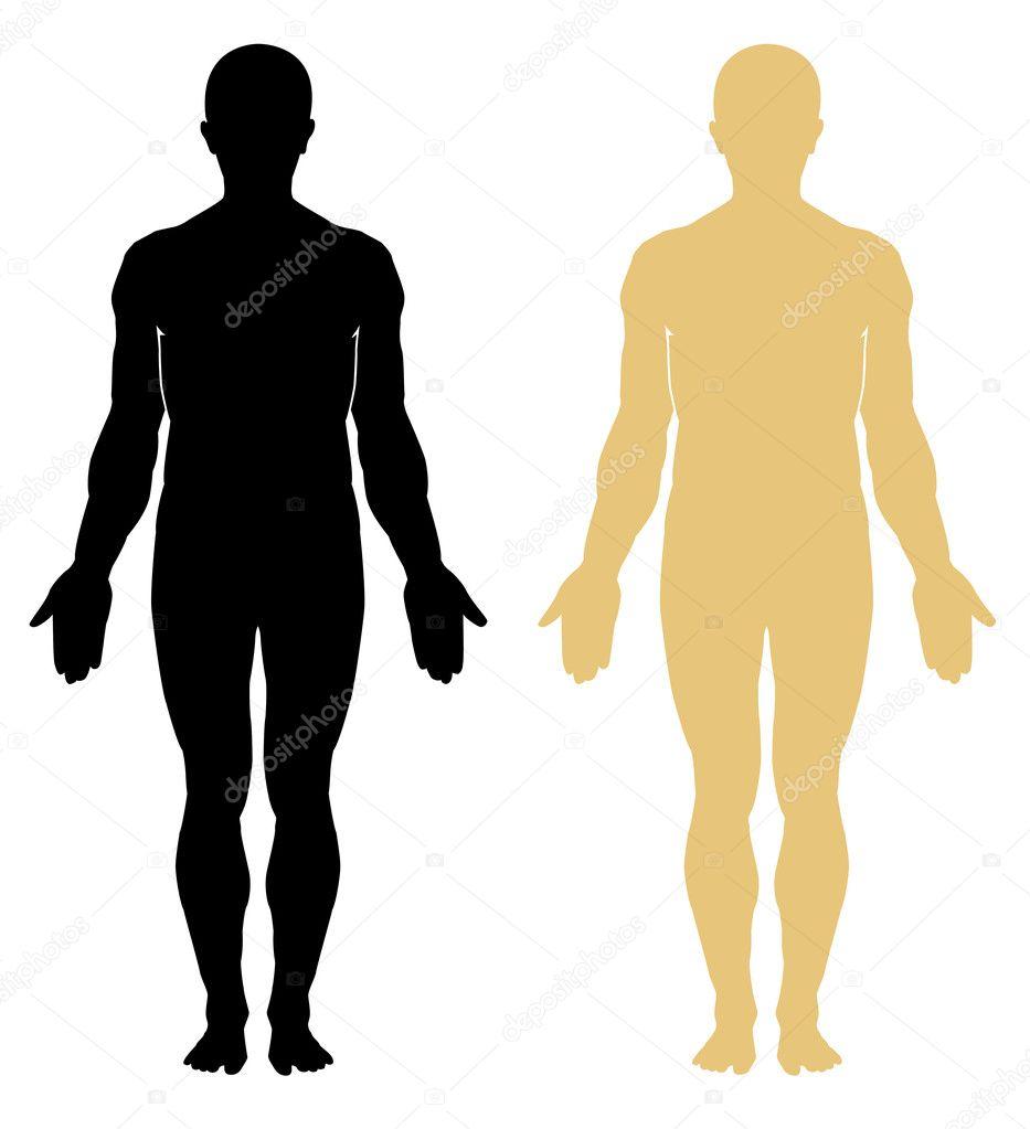 männliche menschliche Anatomie — Stockvektor © leopolis #8058071