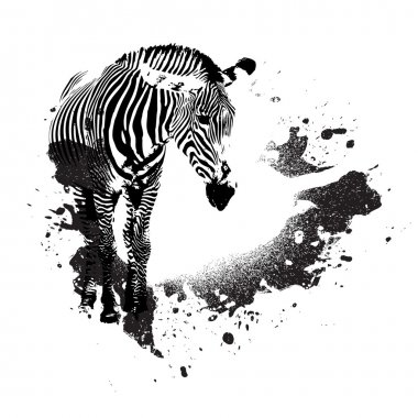 Zebra in black and white with splatted paint accents stock vector