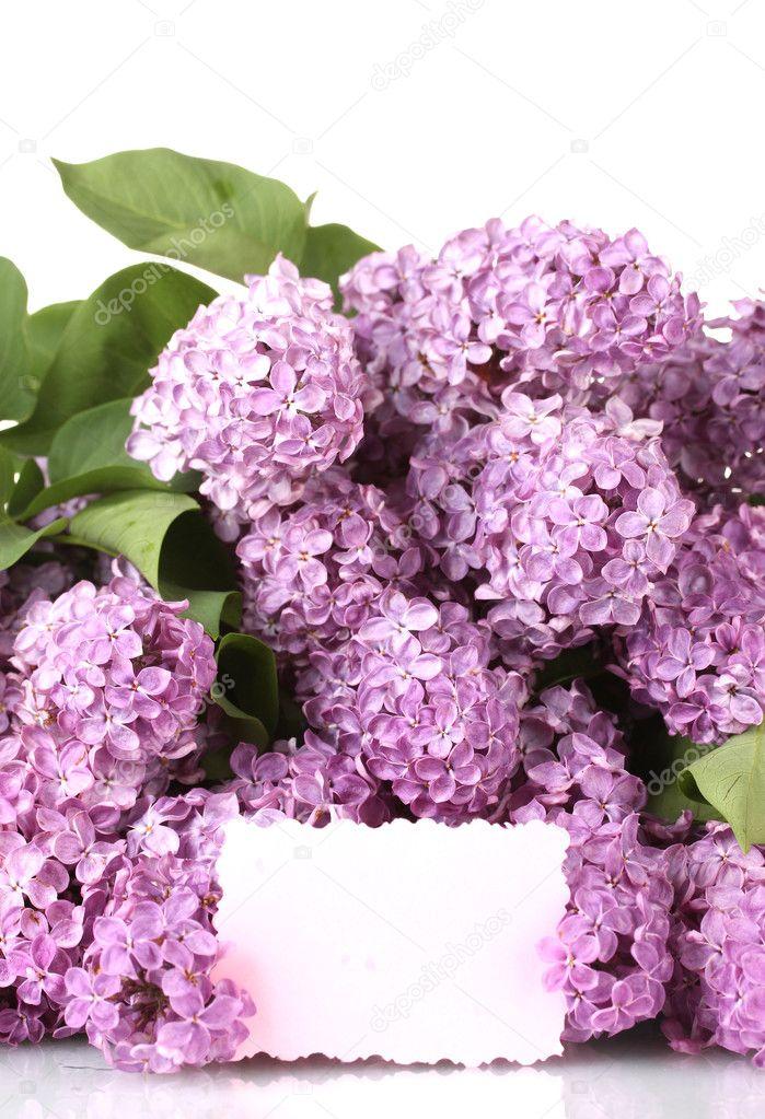 schöne lila Blumen isoliert auf weiss — Stockfoto © belchonock #10586460