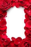 Fényképek gyönyörű Rózsaszirmok vörös rózsa és a rózsa elszigetelt fehér