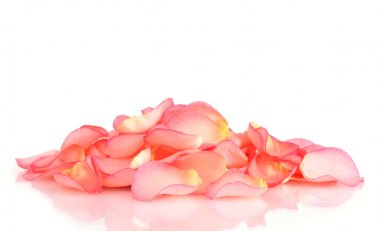 Beautiful pink rose petals isolated on white