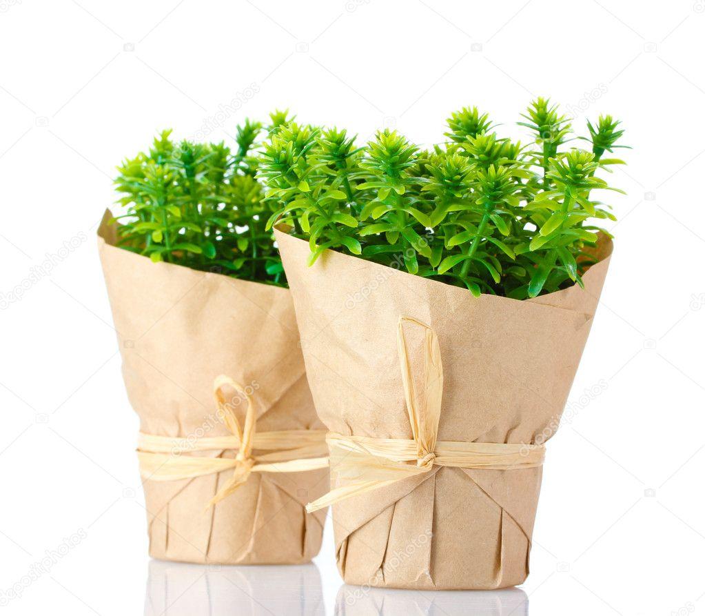 Piante di timo erba in vasi con bella carta decorazioni for Vasi erba