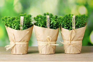 Thyme herb plants in pots with beautiful paper decor on wooden table on green background