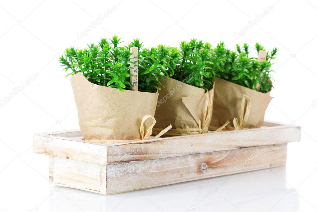 plantes herbe thym en pot avec un d cor beau papier sur. Black Bedroom Furniture Sets. Home Design Ideas