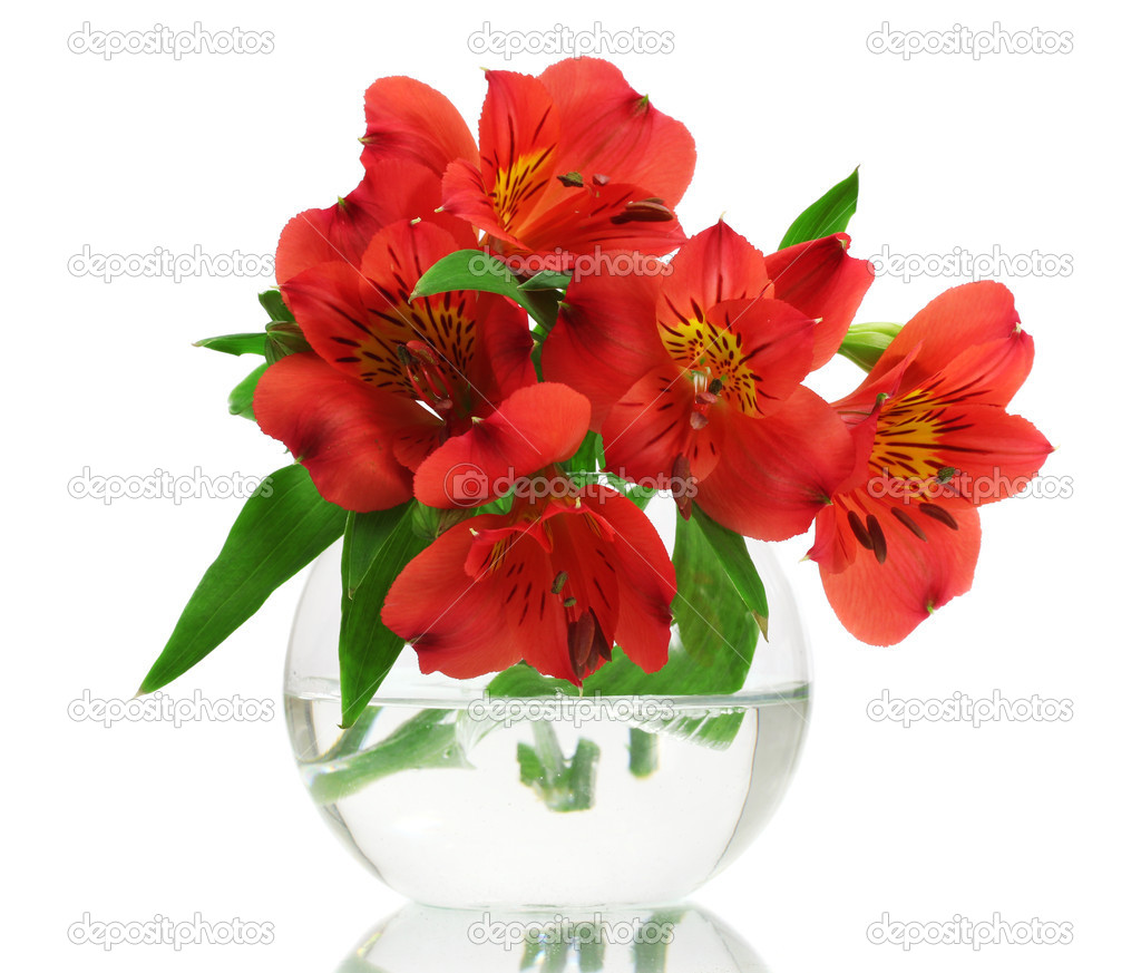 alstroemeria rote blumen in der vase die isoliert auf weiss stockfoto belchonock 9799362. Black Bedroom Furniture Sets. Home Design Ideas