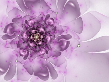 Smooth violet flower, fractal graphic
