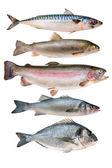 Fotografie sbírka ryb