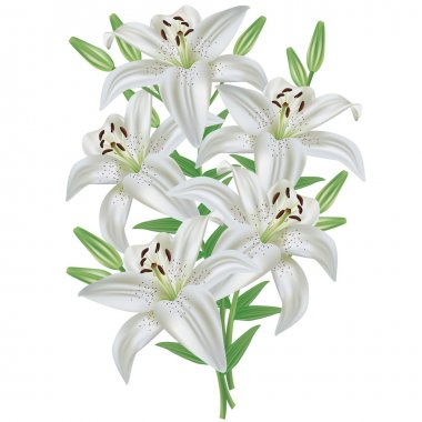 Lily flower bouquet isolated on white background