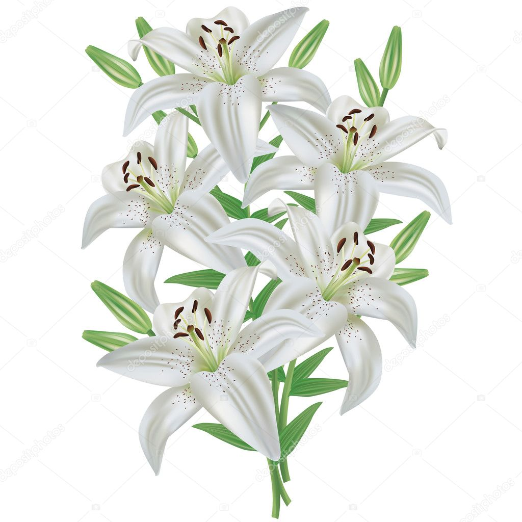 Lily flower bouquet isolated on white background stock vector white lily flower bouquet realistic isolated on white background vector vector by silvionka izmirmasajfo Gallery