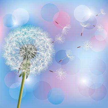 Flower dandelion on light blue - pink background