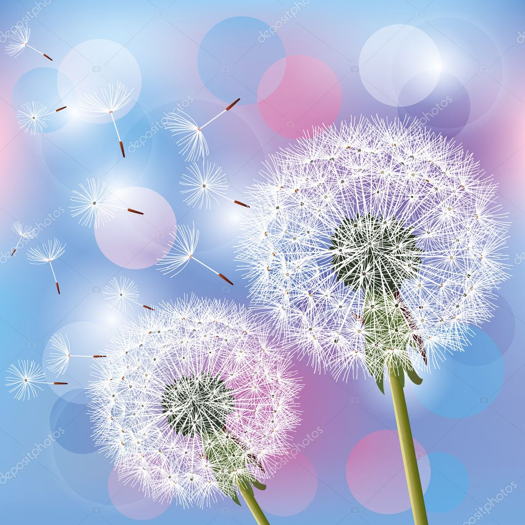 Flowers dandelions on light background