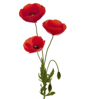 Three poppies bouquet
