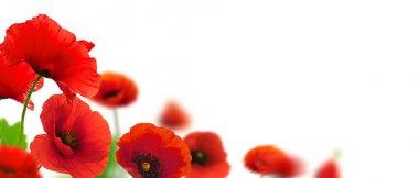 """Картина, постер, плакат, фотообои """"красные цветы мака """", артикул 8342248"""