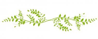 design element, green natural liana