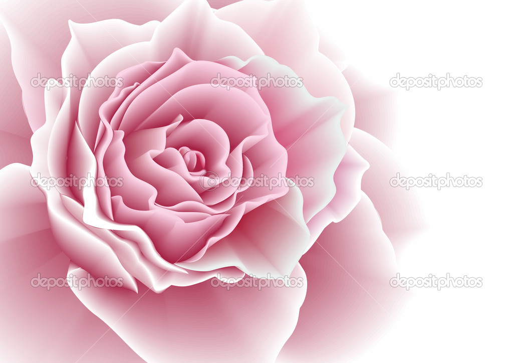 Pink rose. Vector illustration.