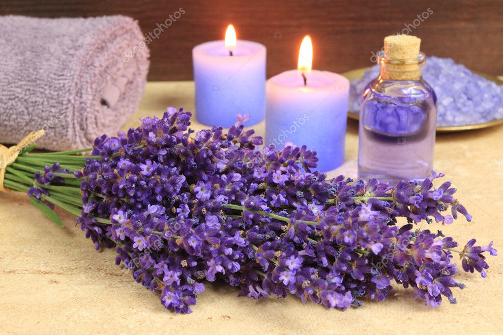lavender oil cats