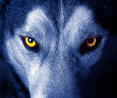 Farkas-szem