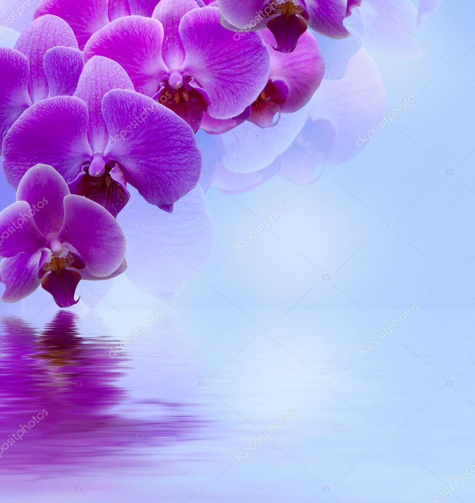 Lilla bella orchidea foto stock kotangens 8646089 for Orchidea acqua