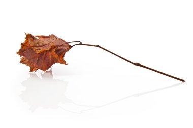 Elegant autumnal leaf