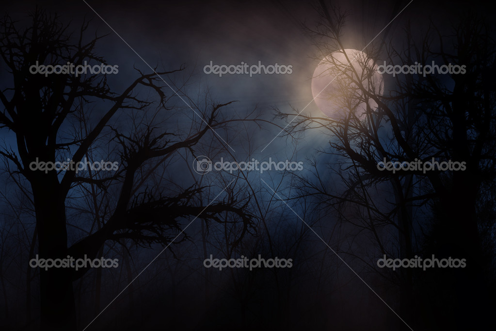 Фотообои Haunted Forest