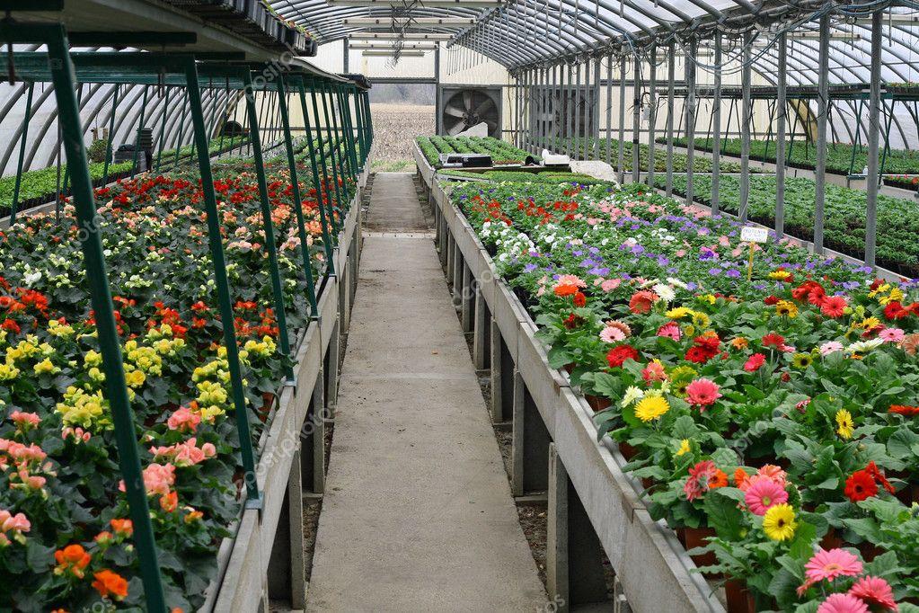 Interior De Uma Estufa Protegida Para O Cultivo De Flores E Plantas U2014  Fotografia De Stock