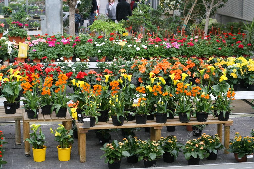 Display of flowering plants for sale inside a greenhouse for Plants for sale