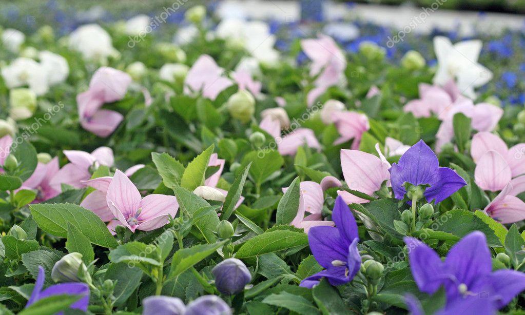 fleurs dans vases d\'une serre à jardin d\'hiver — Photographie ...