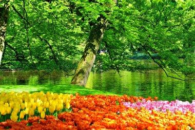 Keukenhof Park - Garden