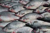pesce dargento