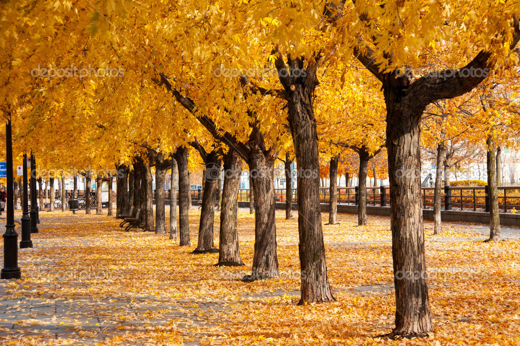 Urban golden leafs arch and carpet