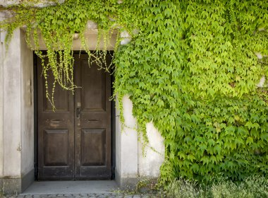 Closed door and green vines