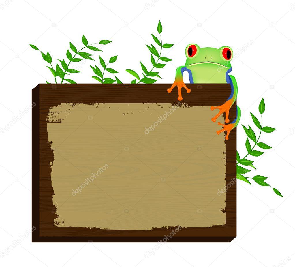 Red eyed tree frog sitting on wood background