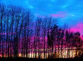 Fotografia alberi spogli al tramonto