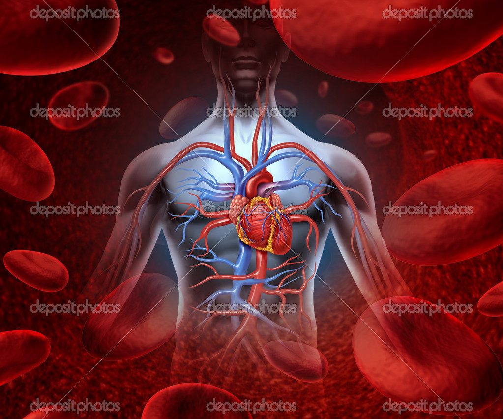 Human Heart Blood System