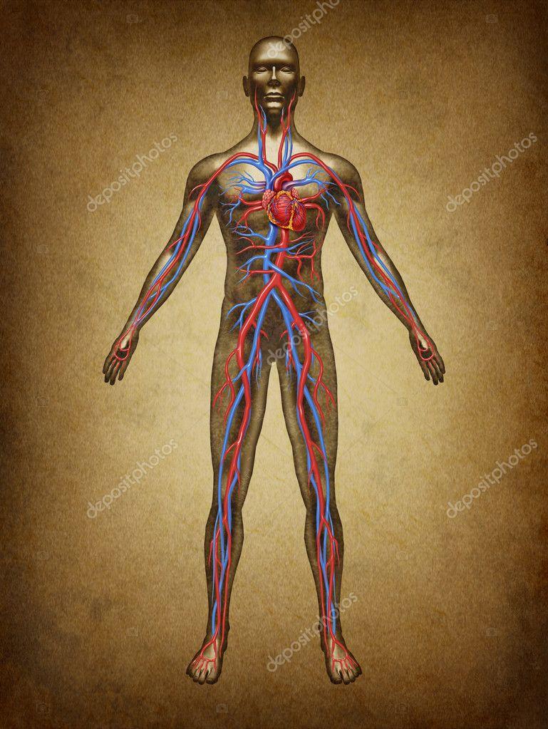 grunge de la circulación de la sangre humana — Foto de stock ...