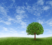 Zelená pole a strom