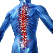 Fotografie Back Pain In Human Body
