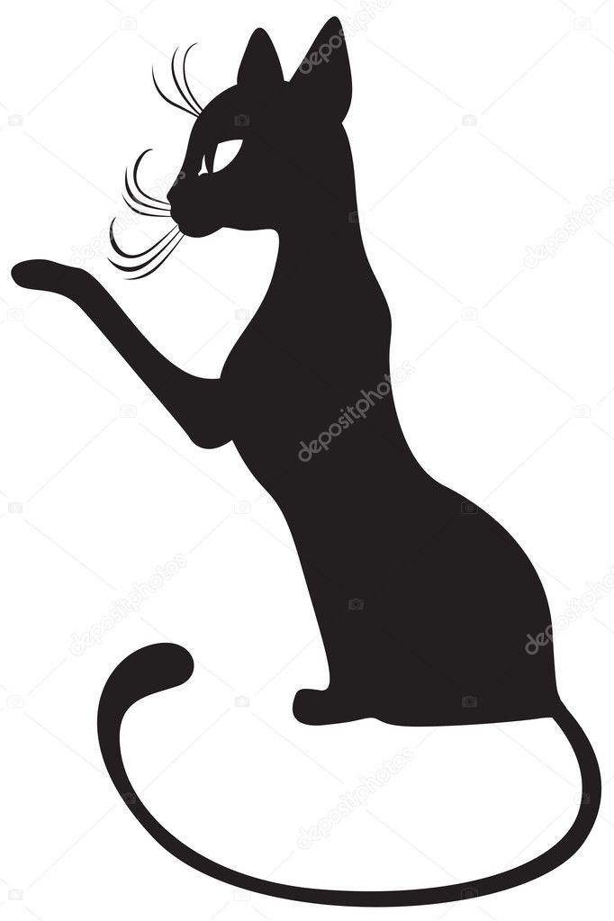 Black cat profile