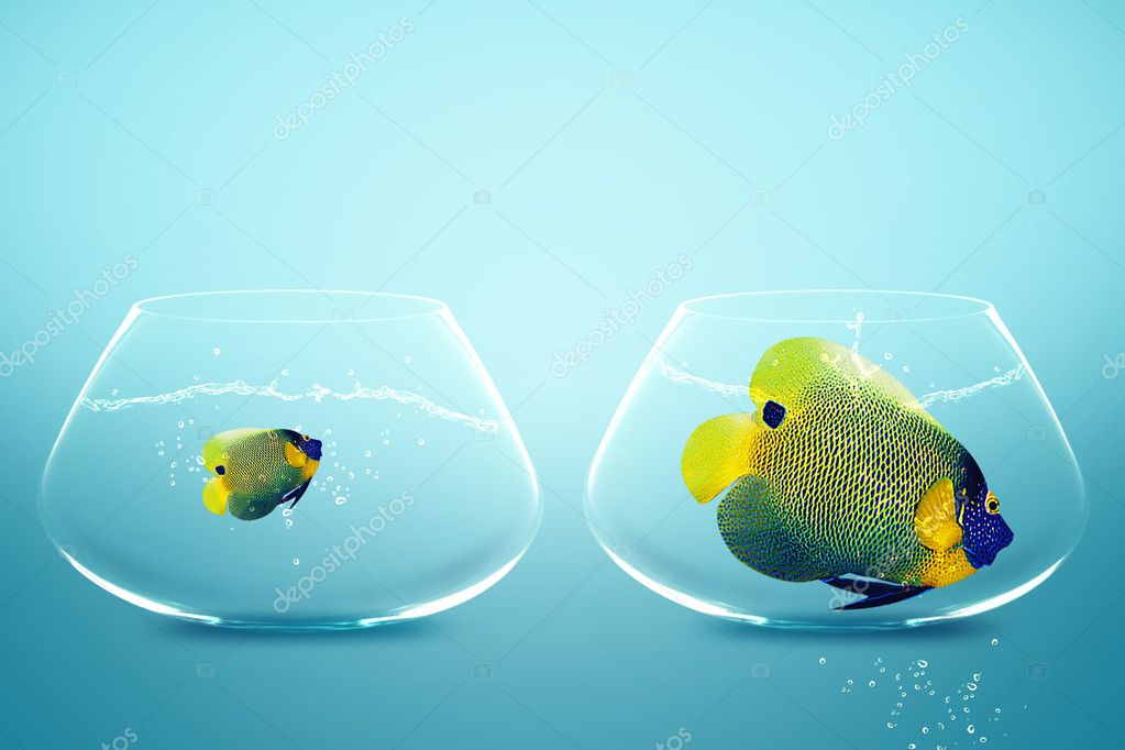 Large and small angelfish