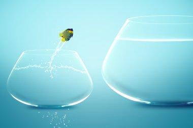 Anglefish jumping into bigger fishbowl