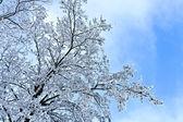 dettaglio dei rami in inverno