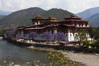 Punakha Dzong in Spring with purple Jacaranda trees (Bhutan)