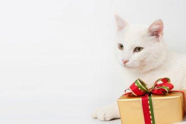 Christmas cat gift