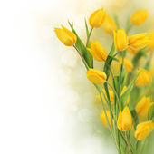 Fényképek tulipán virág design határ