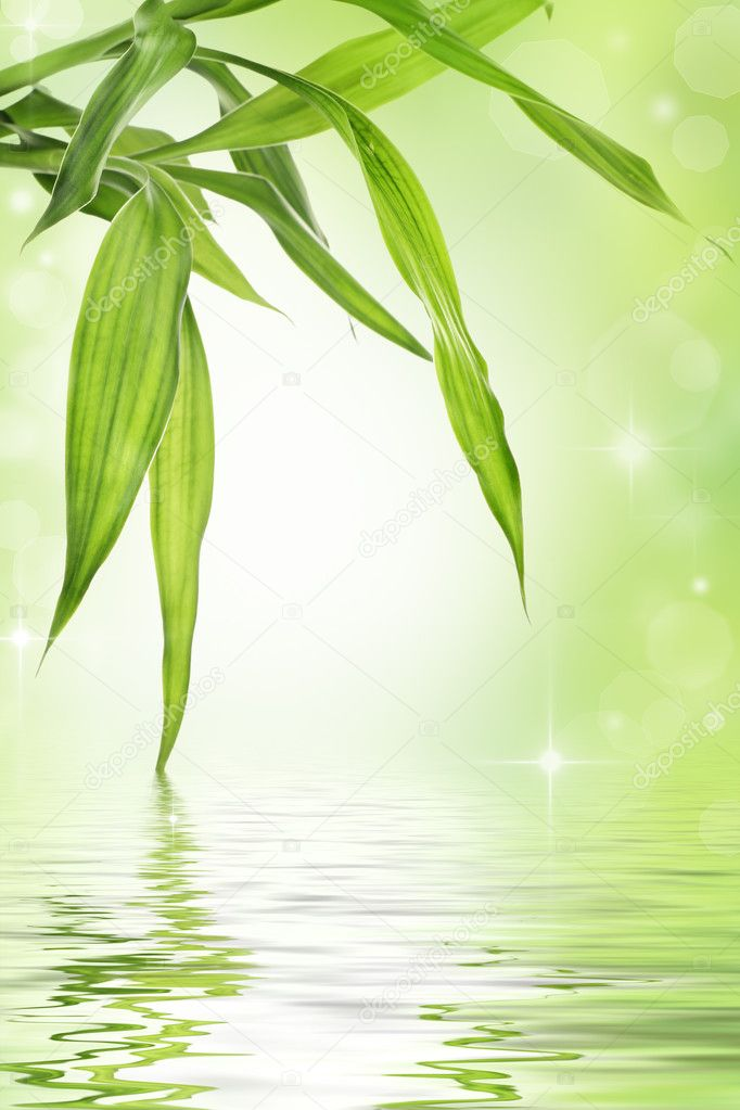 Lucky bamboo design background